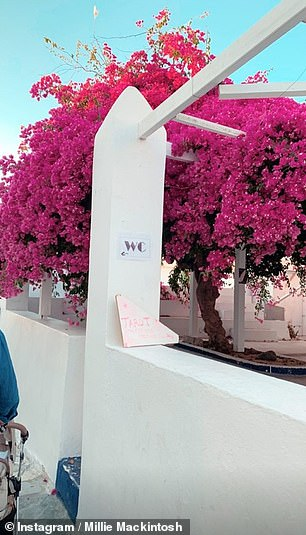 Incredible: A toilet sign was decorated with a pink tree