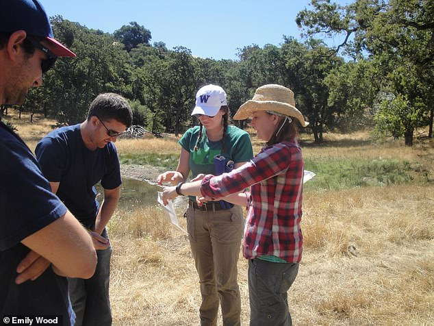 Chelsea Wood, right, and her team of researchers during field work. About a dozen leading parasite ecologists, including Wood, published a paper in the journal Biological Conservation, which lays out an ambitious global conservation plan for parasites