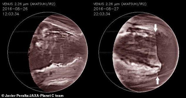 A massive wall of acid clouds has been spotted hiding below the hellish atmosphere of Venus that is swirling around at speeds similar to that of a jet plane. The atmospheric disruption sits about 31 miles above the surface that stretches over 4,000 miles and periodically swipes the solid globe in five days at about 203 miles per hour
