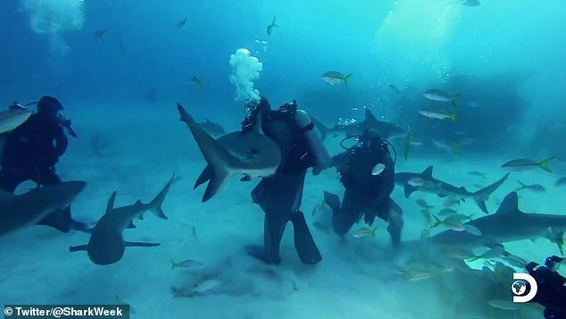 And after diving nearly 50 feet underwater without a cage, he managed it by grabbing its nose