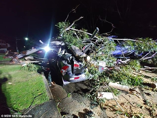 A car is pictured crushed by a fallen tree in Hurstville in Sydney's south following wild weather on Sunday