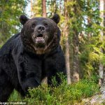 Canadian woman, 44, is mauled to death by black bear outside family cabin
