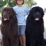 Family approached by strangers offering to pay for picture with their enormous New Foundland dogs