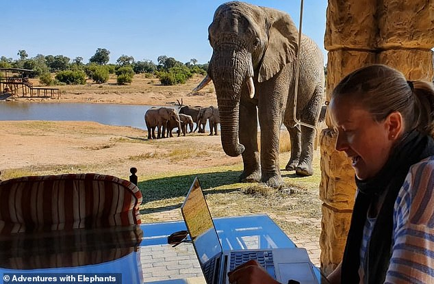 The business has started offering private Zoom meetings for birthdays and group sessions for schools in the UK and around the globe to interact virtually with the elephants and learn about them