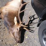 Archery hunter is gored to death by an enraged ELK