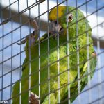 Parrot entertains wildlife park visitors with a perfect rendition of Beyonce hit If I Were A Boy