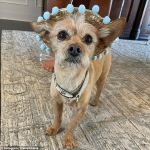 Celeb hairstylist Jen Atkin shares video of dog after he accidentally ate marijuana on the beach