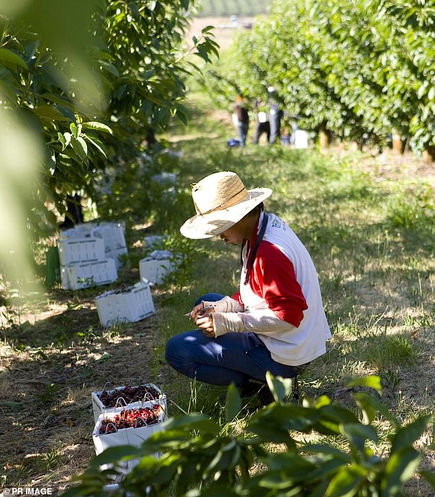 Fair Work Australia has confirmed it is looking into employers in the region which is highly dominated by the horticultural and agricultural sector (stock image)
