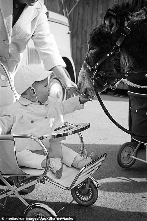 European baby in a vintage stroller meeting a donkey
