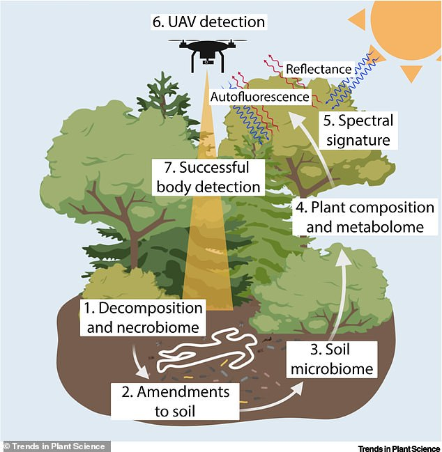 The team will determine how 'cadaver decomposition islands' - the zone immediately surrounding humans remains- change the nutrient concentrations of the soil, and how those changes manifest in the nearby plants Once diagnostic spectra are compiled, researchers can begin to think about scaling up to drones