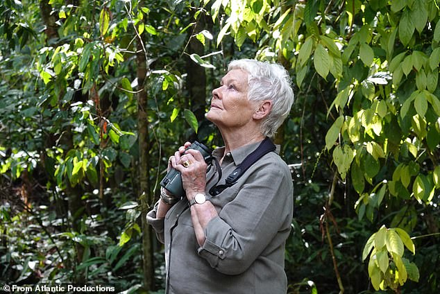 Having declared this week that she had no plans to retire, Dame Judi Dench (pictured in ITV's Judi Dench's Wild Borneo Adventure in 2019) has taken steps to shore up her finances