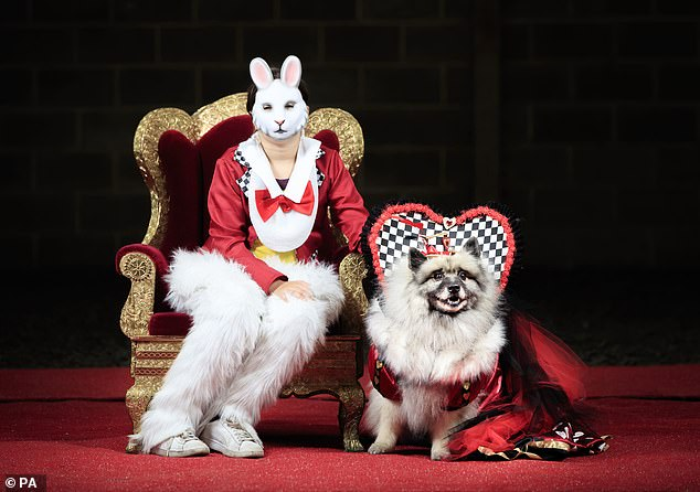 And it wasn't just the pooches! Some owners threw themselves into the spirit of the day by dressing up to match their puppies (pictured,Lily Blathorn with Keisha the Keeshond dog, dressed as the White Rabbit and Queen of Hearts)