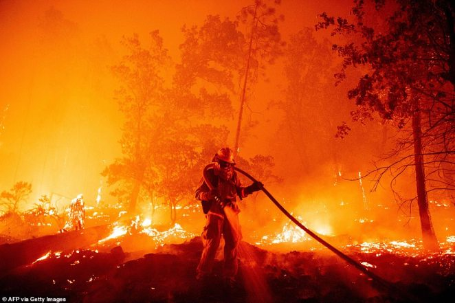 Fire Departments across California have battled more than 900 wildfires since August 15, many of which have been spurred by record-breaking temperatures and an intense freak series of thousands of lightning strikes (pictured: Afirefighter douses flames as they push towards homes during the Creek fire in the Cascadel Wood)