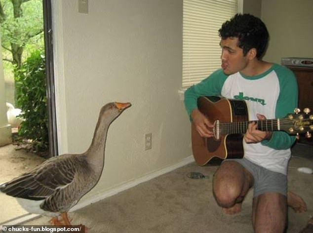 Blogspot user Chuck, rounded up a selection of hilarious viral photographs that capture single life, including a snap of a man in Nashville serenading a bird in his home