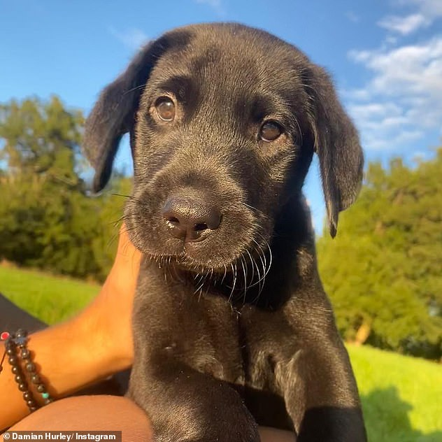 Lovely: Damian gave the unnamed dog its social media debut