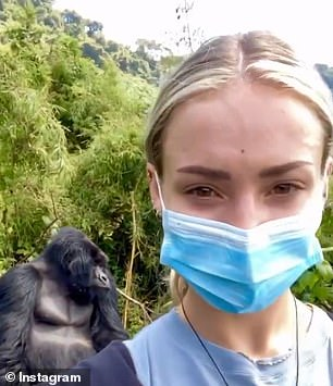 She shared video on her Instagram about endangered silverback gorillas.