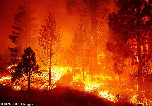 Wind and flames leap high in the air as firefighters attempt to put out the Creek Fire off of Camp Sierra Roa