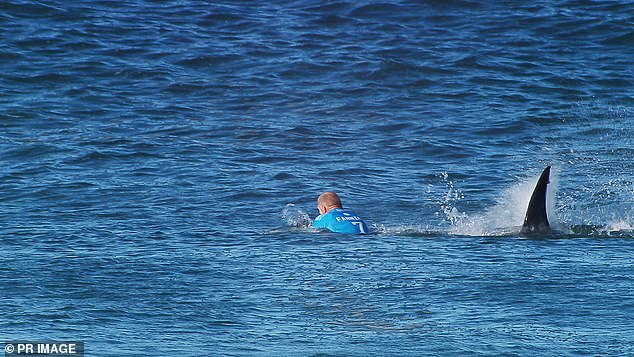 Mick Fanning pictured being attacked by a shark during the JBay Open in South Africa in 2015. The star surfer reportedly contacted a young surfer who was metres away from Tuesday's mauling to give him words of comfort