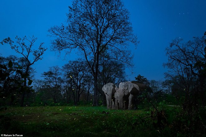 Nayan Jyoti Das took home the prize for Creative Nature Photography with 'A Mirage In The Night.' The photo depicts a family of elephants huddled together in a national park in Assam as fireflies flit about