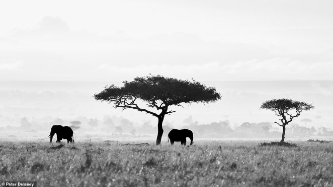 Before moving to Africa and deciding to go travelling across the continent, Peter, who is originally from Ireland, worked in the finance industry in London and Tokyo. This beautiful shot was taken in the Mara Triangle