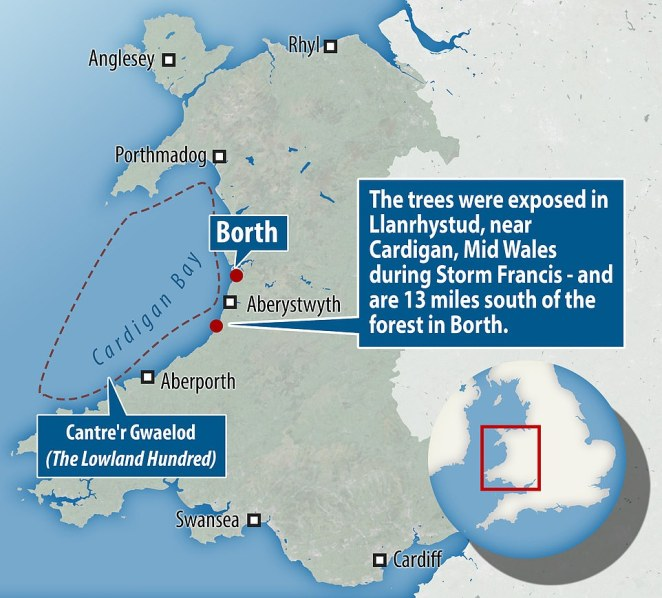 Some of the trees regularly make an appearance in Borth, Ceredigion, but now they have been sighted 13 miles (21km) south in Llanrhystud