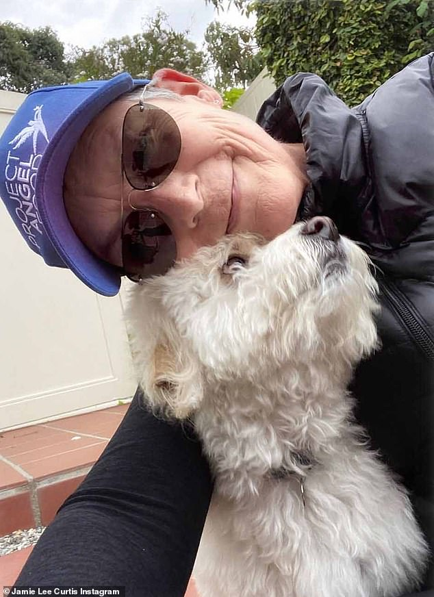 They found that changes in very few genes are capable of defining a new breed — and that many labradoodles also feature small numbers of spaniel genes as well. Pictured, actress Jamie Lee Curtis and her labradoodle
