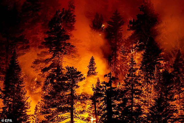 More than 746,000 acres in California have burned, including theBobcat Fire (above) in the woods in the Angeles National Forest north of Monrovia