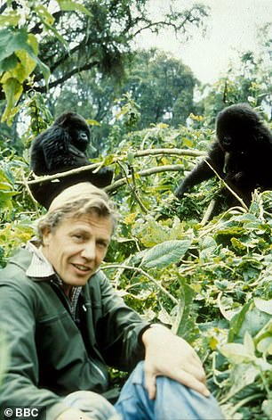 David Attenborough is pictured above in Rwanda filming on location for Life on Earth in 1979