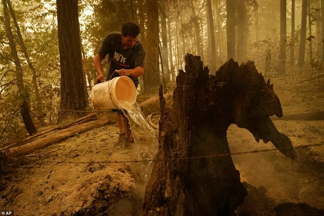 Erik Tucker pours water on a smoldering stump in an area around his home burned by the Beachie Creek Fire in Lyons, Oregon, on Saturday
