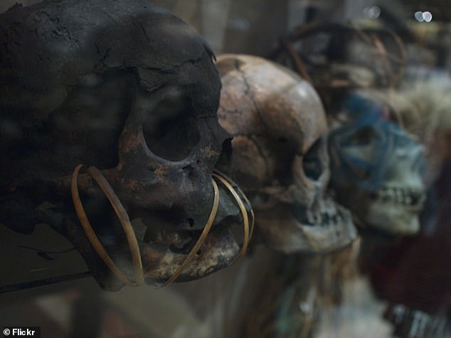 Shrunken heads in the museum, pictured.The latest removal comes as part of a three-year internal review from the museum to 'deeply engage with its colonial legacy'