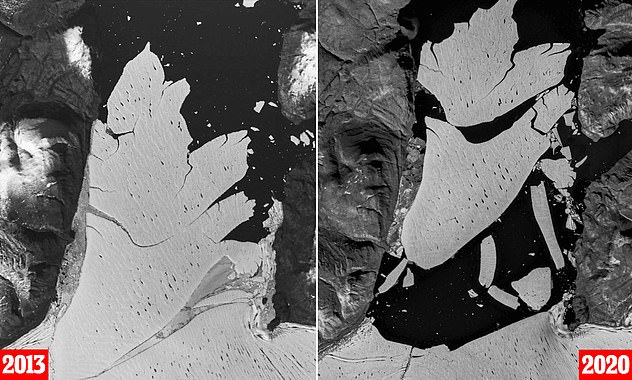 Researchers working for the Geological Survey of Denmark and Greenland (GEUS) studied satellite images of the ice shelf taken over the past seven years. Left is the shelf in 2013 and right is the same shelf this year