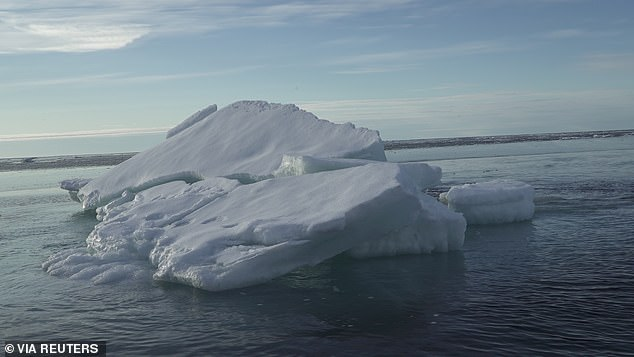Greenpeace's Arctic Sunrise ship spotted the prints on the chunks of ice as huge amounts are breaking off