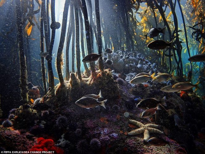 Craig dived to the kelp forest partly to 'teach himself underwater tracking to the highest level possible'