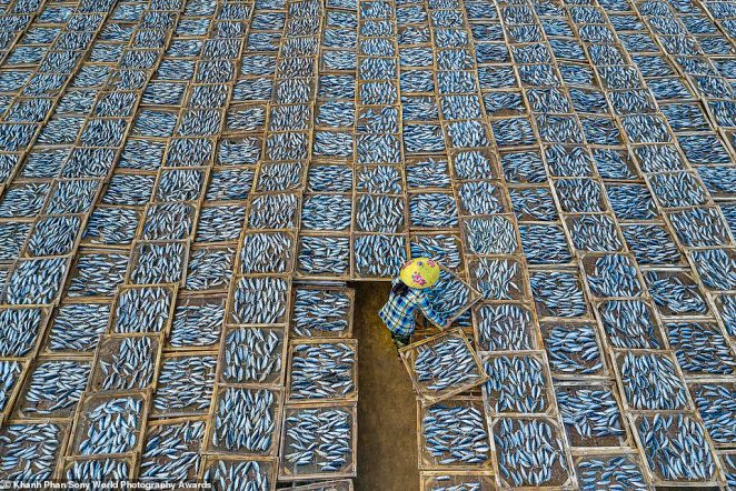 A mesmerising aerial shot of a woman drying fish at Long Hai fish market in Vietnam snapped byKhanh Phan. It is an entry in the travel category