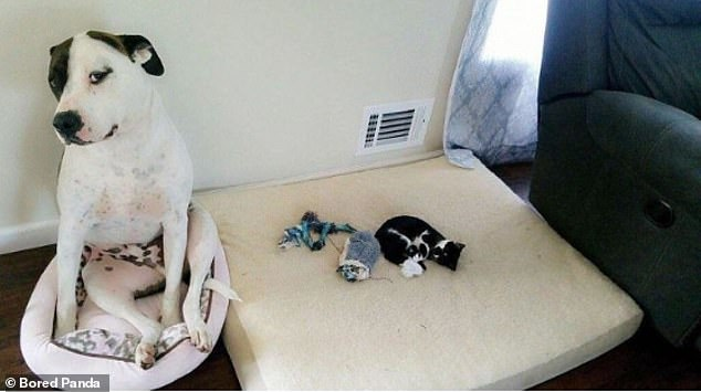 With sadness in his eyes, this dog knows his bed has been taken for the night and that he won't be getting it back anytime soon