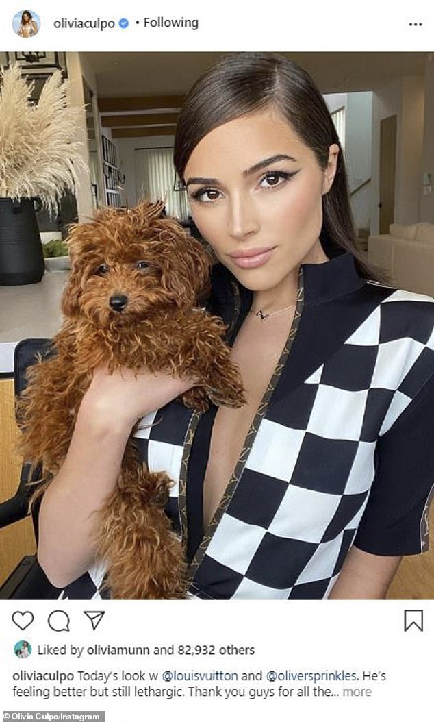 Puppy love: Earlier in the day, Culpo had modeled the look on Instagram while posing with her sweet pooch, toy golden doodle Oliver Sprinkles