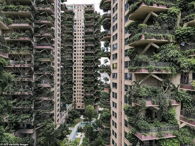 The plants on the balconies inChengdu's Qiyi City Forest Garden have overgrown and been invaded by mosquitoes