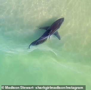 There have been several shark sightings this week