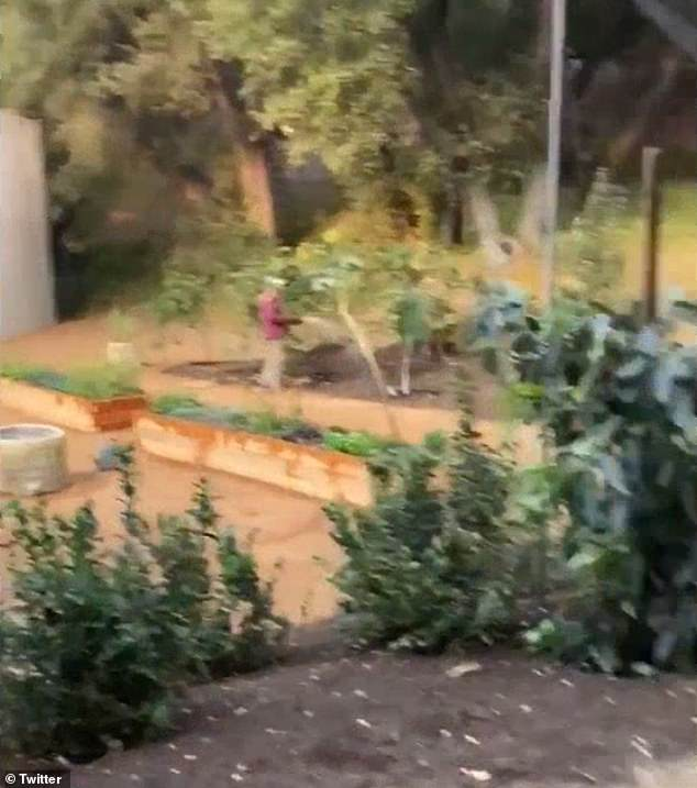 The video showed another person watering the plants beside the new wall