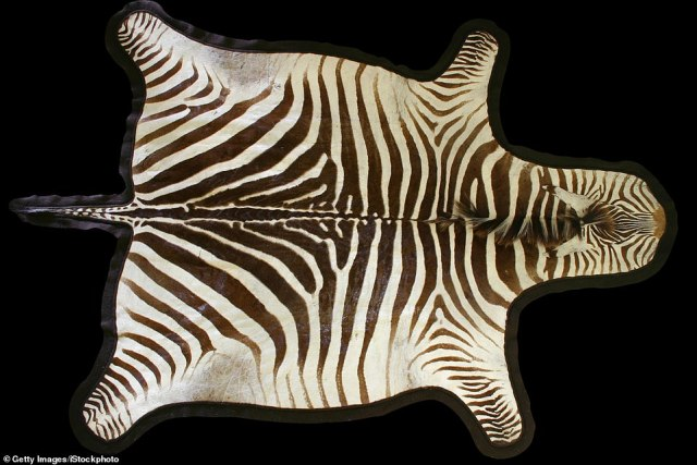 Wild: A zebra skin found its way to Unclaimed Baggage's premises (actual item not pictured)