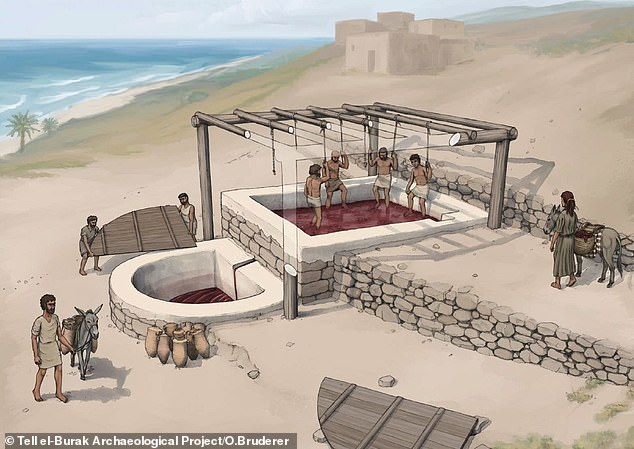 Reconstruction of the wine press at Tell el-Burak, looking from the south-east.Wine makers would have stomped the grapes in the 10-foot-square basin, with the resulting liquid trickling down into a semi-circular vat below for collection and fermentation