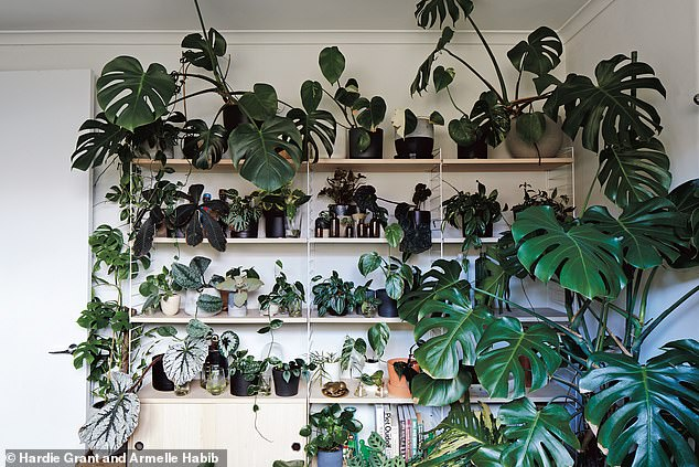 Heturned his home into an indoor garden after years of collecting rare and unusual plants