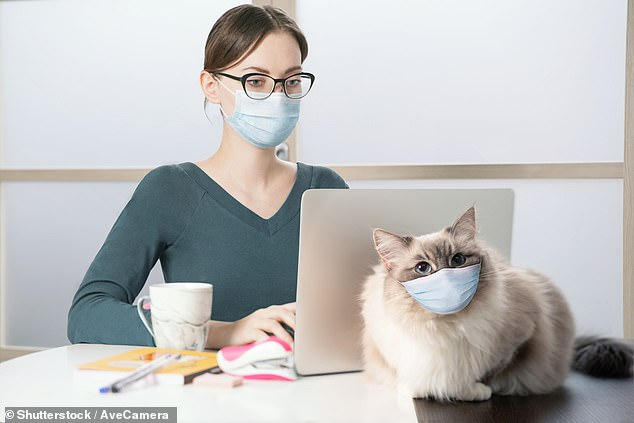 Veterinary experts from Canada have warned those suspected to have contracted the novel coronavirus to stay away from their furry friends — for the latter's sake (stock image)
