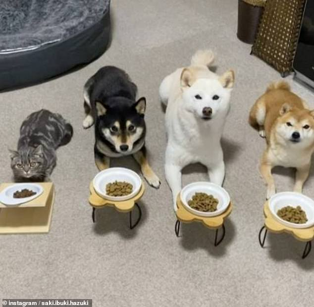 In another snap, all four of them including Kiki are seen waiting patiently in front of their dinner bowl