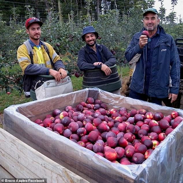 Bravo Apples are officially the healthiest apples to eat in the world following research fromEdith Cowan University in Western Australia (Bravo Apples Facebook)