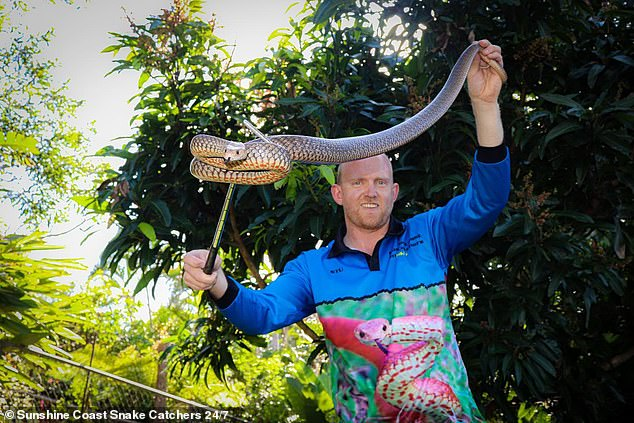 Mr McKenzie issued a warning to Queenslanders as many large adult snakes are on the move