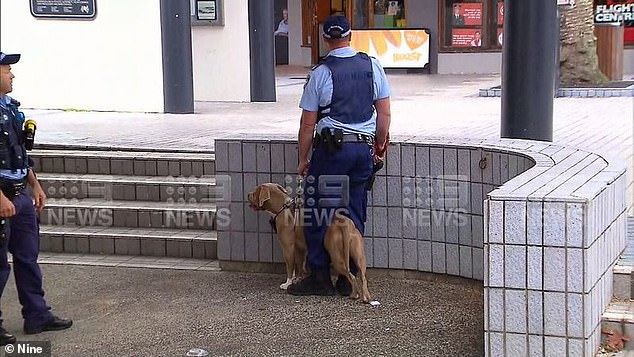 Daily Mail Australia understands the woman was trying to break up two dogs fighting (pictured, one of the dogs believed to be involved in the incident)
