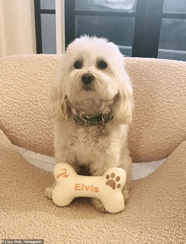 Everyone knows my name: In a separate snap, the cute pup is seen posing with a large bone name plate as he sits on an arm chair