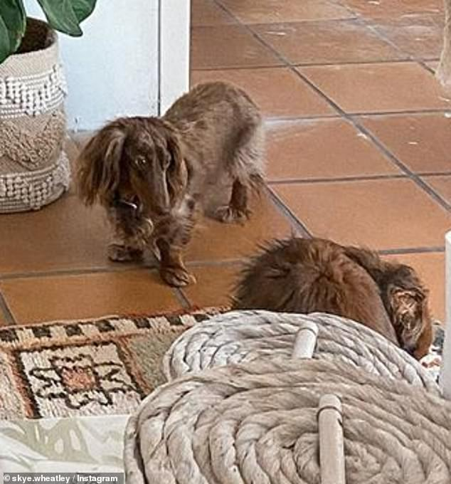 Mystery solved? Upon closer inspection it seems Skye post was actually a reference to her pet dachshunds Winston and Crunchie (pictured), who were seen playing in the background