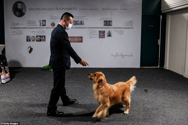 The well-groomed dogs were seen standing next to their equally well-dressed owners while being examined by the judges based on the animal¿s appearance.The event comes as thousands of Chinese partygoers have packed out a water park in the city of Wuhan as the former coronavirus ground zero edges back to normal life